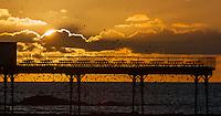 2016 02 11 Starlings murmuration,Aberystwyth,Wales,UK