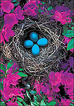"""Robin's Nest, Washington<br /> 5 x 7"""" blank notecard with white envelope. Printed in the USA with soy-based inks on recycled paper. Watermark does not appear on product."""