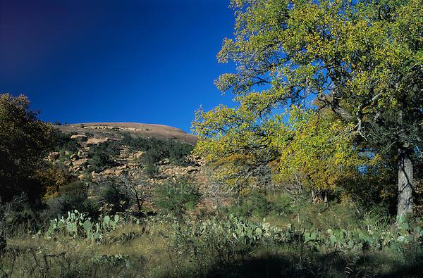 Dome and Live Oak tree,Enchanted Rock State Natural Area, Fredericksburg,Texas, USA