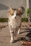 Street Cat In Istanbul