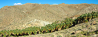 Stock - Palm Springs Area Desert Scenics