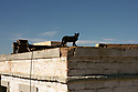 Spain - Andalusia - A wild cat is seen on the rooftop of the Mexican pueblo at Fort Bravo, a Western movie set.