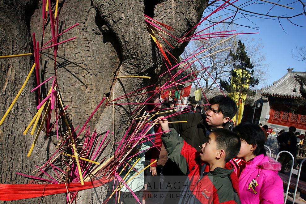 CHINA. Placing incense on a tree during Chinese New Year in Baiyun Temple in Beijing.  Chinese New Year, or Spring Festival, is the most important festival and holiday in the Chinese calendar In mainland China, many people use this holiday to visit family and friends and also visit local temples to offer prayers to their ancestors. The roots of Chinese New Year lie in combined influences from Buddhism, Taoism, Confucianism, and folk religions.  2008