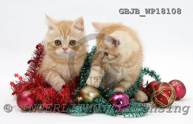 Kim, CHRISTMAS ANIMALS, photos, GBJBWP18108,#XA# stickers