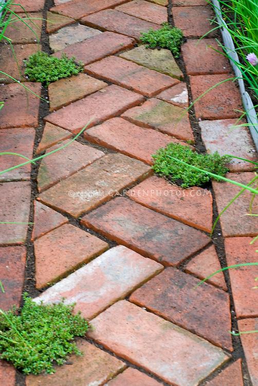 Thymes (Thymus) amid brick pathway