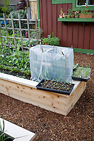 Backyard, small space raised bed vegetable garden with young seedlings hardening off and enclosure to retain heat; Jennifer Carlson garden