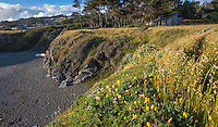 Pebble Beach at The Sea Ranch showing homes protected by natural hedgerows.