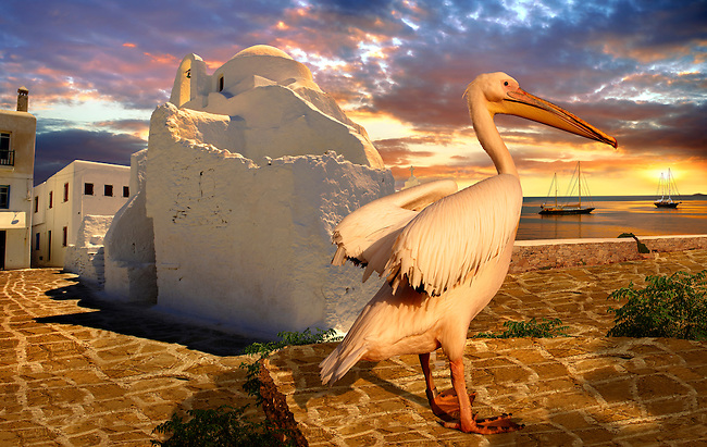 Sunset over the Paraportiani Greek Orthodox churches of Mykanos Chora with the Pelican town mascot Petros, Cyclades Islands, Greece