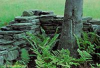HS73-001z  Fern - in garden setting