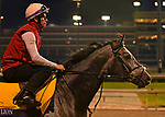 October 31, 2018 : Roaring Lion, trained by John Gosden, trains for the Breeders' Cup Classic at Churchill Downs on October 31, 2018 in Louisville, KY. Jessica Morgan/ESW/CSM