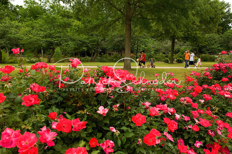 Flowers are in full bloom at Freedom Park in the Myers Park neighborhood in Charlotte, NC. Myers Park is one of the premier neighborhoods in North America and known for its large canopy of trees.