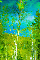 """""""WALDEN REFLECTIONS""""<br /> <br /> Aspen trees reflected in the blue waters of Walden Pond at Dancing Deer Ranch. ORIGINAL 24 X 36 GALLERY WRAPPED CANVAS SIGNED BY THE ARTIST $2,500. CONTACT FOR AVAILABILITY."""