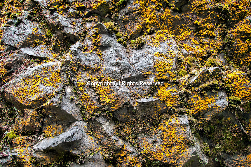 A close-up of a wall covered with lichen and moss at the famous South Falls during the Autumn at Silver Falls State Park in Oregon, USA.
