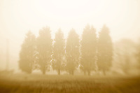 Fall Mist on Orchard Way.No Use Without Written License Agreement