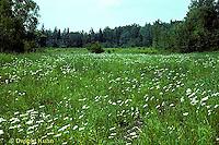 SC01-001e  Meadow - plant succession meadow - first stage - (series - SC01-001e,028z,029z,030z)