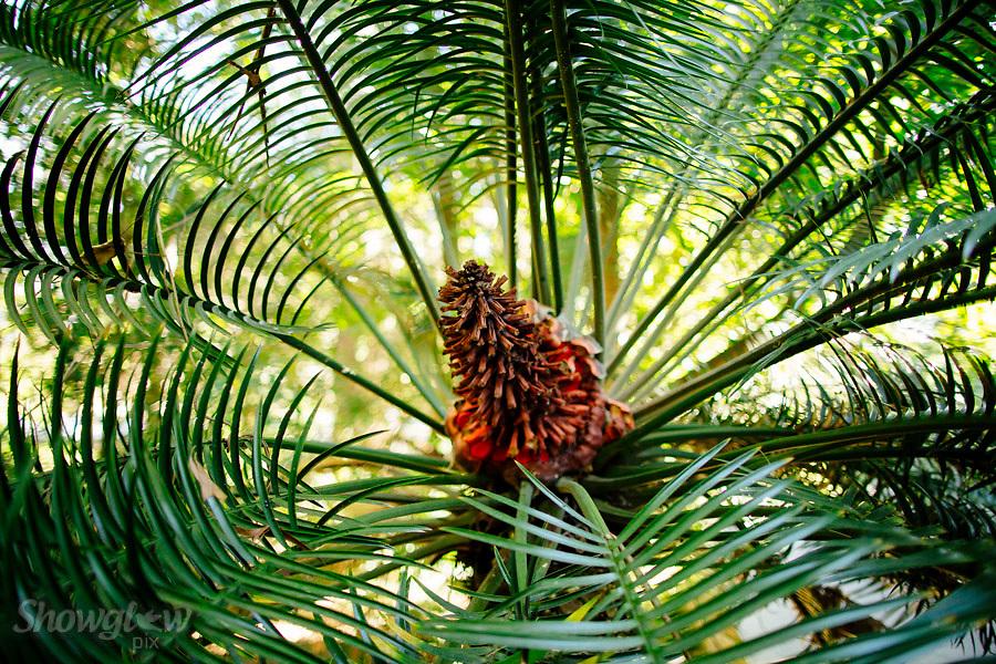 Image Ref: M280<br /> Location: Royal Botanical Gardens, Melbourne<br /> Date: 03.06.17