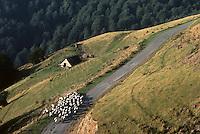 Europe/France/Aquitaine/64/Pyrénées-Atlantiques/Haute Soule: Moutons au col d'Orgamdieska