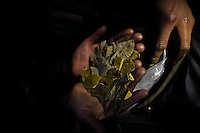 A miner holds the dried coca leaves inside of a gold mine in La Rinconada, Peru, 4 August 2012. During the last decade, the rising price of the gold has attracted thousands of people to La Rinconada in the Peruvian Andes. At 5300 metres above sea level, nearly 50.000 people work in the gold mines and live in the nearby colonies without running water, sewage system or heating service. Although the work in the mines is very dangerous (falling rocks, poisonous gases and a shifting glacier), the majority of miners have no contract and operate under the cachorreo system - working 30 days without payment and taking the gold they supposedly find the 31st day as the only salary. In spite of a demaged environment, caused by mercury contamination from the mining and the lack of garbage disposal, people continue to flock to the region hoping to find their fortune.