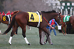 20 February 2009:  Calvin Borel places an very disappointed 9th place riding Dryfly in The Southwest at Oaklawn in Hot Springs, Arkansas