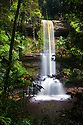 Takob-Akob Falls plunging 38 metres through the rainforest. The falls cascade over three sandstone shelves, separated by receded eorded bands of softer mudstone. Southern plateau edge, Maliau Basin, Sabah's 'Lost World', Sabah, Borneo, Malaysia.