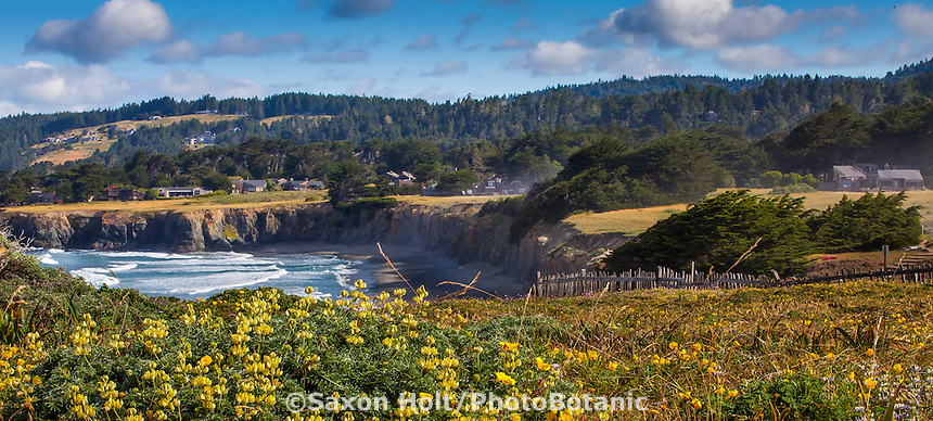Coastal homes around The Sea Ranch Meadow seen from Black Point Beach, protected by hedgerows for privacy and wind protection