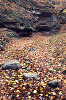 Sandstone cliffs and stream, Woodman Hollow State Preserve, Webster County, Iowa