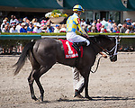 HALLANDALE BEACH, FL - MARCH 04: #4 Bird Song ridden by Julien Leparoux after winning the G3 Fred Hooper  Stakes at Gulfstream Park, Hallandale Beach, FL. (Photo by Arron Haggart/Eclipse Sportswire/Getty Images)