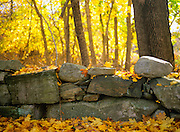 Stonewall in a New Hampshire USA forest during the autumn months.
