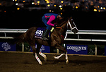 DEL MAR, CA - OCTOBER 30: Bucchero, owned by Ironhorse Racing Stable LLC and trained by Tim Glyshaw, exercises in preparation for Breeders' Cup Turf Sprint at Del Mar Thoroughbred Club on {mothname} 30, 2017 in Del Mar, California. (Photo by Scott Serio/Eclipse Sportswire/Breeders Cup)
