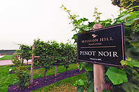 Looking at the Mission Hill Winery Pinot Noir Grape Vines with a background of smoke from the BC forest fires.