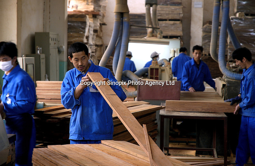 Workers in Hong Qi wood floor factory, a private firm which produces floor boards for the booming domestic market and for export to Europe (including UK) and the United States, using wood imported from Asia and South America.
