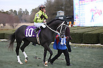 20 February 2009: Mission Impazible before The Southwest at Oaklawn in Hot Springs, Arkansas