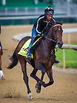 LOUISVILLE, KY - MAY 04: Exaggerator gallops in preparation for the Kentucky Derby at Churchill Downs on May 04, 2016 in Louisville, Kentucky. (Photo by Zoe Metz/Eclipse Sportswire/Getty Images)