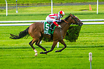 JUNE 06, 2020 : Newspaperofrecord (IRE) with Irad Ortiz Jr. aboard, wins the Grade 3 Intercontinental Stakes, going 7 Furlongs on the turf, at Belmont Park, Elmont, NY.  Sue Kawczynski/Eclipse Sportswire/CSM