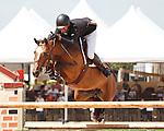 Athena ridden by Charlie Jayne,  USEF trials#2 Wellington Florida. 3-22-2012