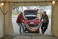 A deer is removed from the trunk of a car into the storage tent at the check station.<br />