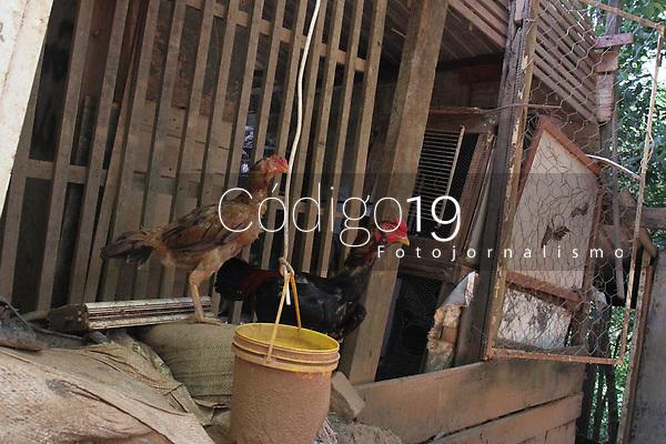 Campinas (SP), 24/02/2021 - Maus tratos-SP - Em operação da Guarda Municipal de Campinas, interior de São Paulo, nesta quarta-feira (24), foram encontrados diversos galos em situação de maus tratos na Vila Brandina. Nenhum responsavel foi encontrado no local e segundo a GM os galos seriam usados em rinhas.