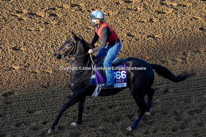 November 5, 2020: Pirate's Punch, trained by trainer Grant T. Forster, exercises in preparation for the Breeders' Cup Dirt Mile at Keeneland Racetrack in Lexington, Kentucky on November 5, 2020. John Voorhees/Eclipse Sportswire/Breeders Cup/CSM