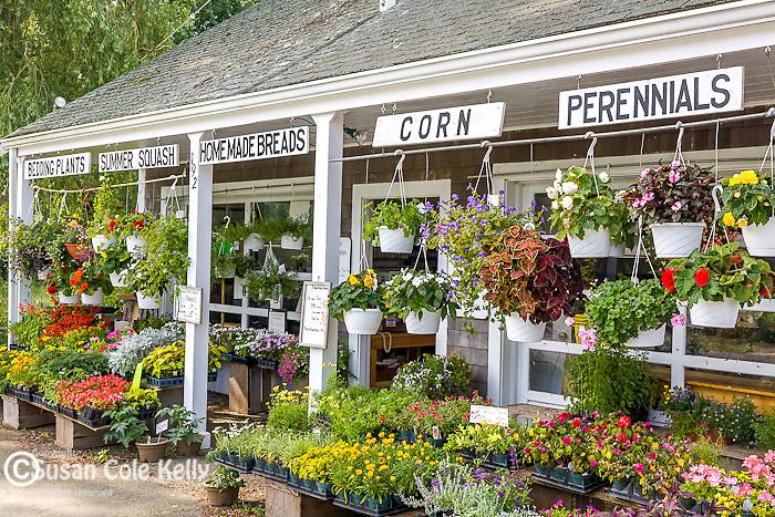 Farmstand in Sandwich, Cape Cod, MA