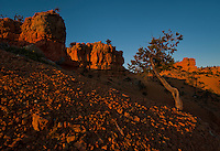 Red canyons, Utah.