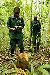 Anti-poaching snare removal team members, John Okwilo and Godfrey Nyesiga, noting illegally cut tree, Kibale National Park, western Uganda