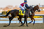 MARCH 09, 2019 : Post parade Much Better & Mike Smith, the Gotham Stakes for 3-year olds at Aqueduct Racetrack on March  09, 2019 in Ozone Park, NY.  Sue Kawczynski/ESW/CSM