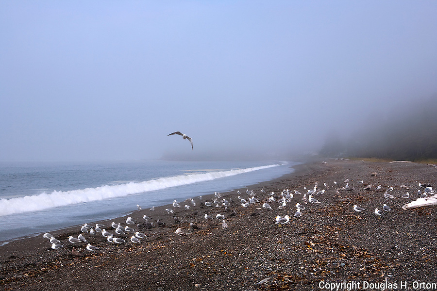 Fog shrouds Clallam Spit, Clallam Bay, near the west end of the Strait of Juan de Fuca and the fishing community of Sekiu. Olympic Penninsula, Washington.  Outdoor Adventure. Olympic Peninsula