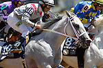 May 19, 2012 T M Fred Texas, Abel Castellano, Jr. up, [asses the stands for the first time on his way to winning the President of United Arab Emirates Cup Series (Gr. I) for Arabian horses at Pimlico Race Course in Baltimore, Maryland. photo by Joan Fairman Kanes