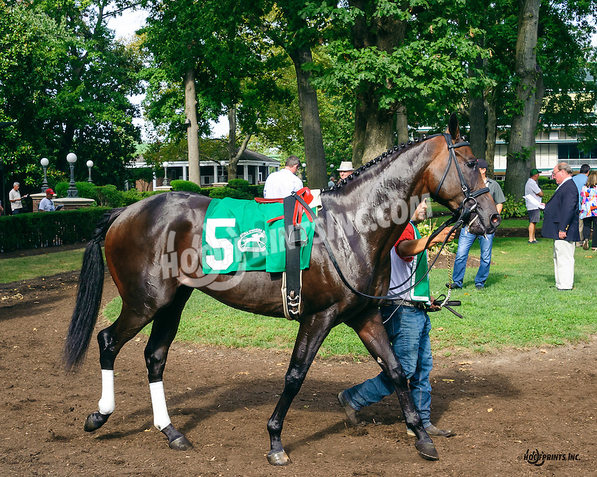 Our Rombauer before The First State Dash Stakes at Delaware Park on 9/10/16