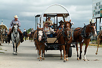 Wagon pulled by three horse, Equus ferus caballus,s on the road during the parade of the annual trailride in Bandera, South of Texas, USA, United States. The Great Western Cattle Trail - also known as the Dodge City Trail and the Old Texas Trail was known for cattle drives including Longhorns to the markets in the eastern part of the USA. The trail began in Bandera County, Texas and ended in Dodge City, Kansas. The entire trail extended from southern Texas to the Canadian border.