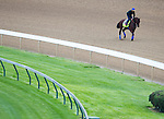 APRIL 30, 2015: American Pharoah, trained by Bob Baffert  exercises in preparation for the 141st Kentucky Oaks during morning workouts at Churchill Downs in Louisville, Kentucky. Ting Shen/ESW/Cal Sport Media
