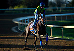 November 3, 2020: Mucho Unusual, trained by trainer Tim Yakteen, exercises in preparation for the Breeders' Cup Filly & Mare Turf at Keeneland Racetrack in Lexington, Kentucky on November 3, 2020. Jon Durr/Eclipse Sportswire/Breeders Cup