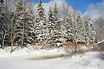 A Fresh Blanket of Snow Decorates the Evergreen Trees along a Wintry Ashuelot River in New Hampshire