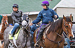 LOUISVILLE, KY - MAY 05:  Destin, trained by Todd Pletcher and owned by Twin Creeks Racing Stables, LLC, exercises and prepares during morning workouts for the Kentucky Derby and Kentucky Oaks at Churchill Downs on May 5, 2016 in Louisville, Kentucky.(Photo by Sue Kawczynski/Eclipse Sportswire/Getty Images)